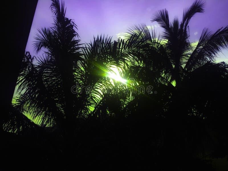 Небо захода солнца силуэта стоковая фотография rf
