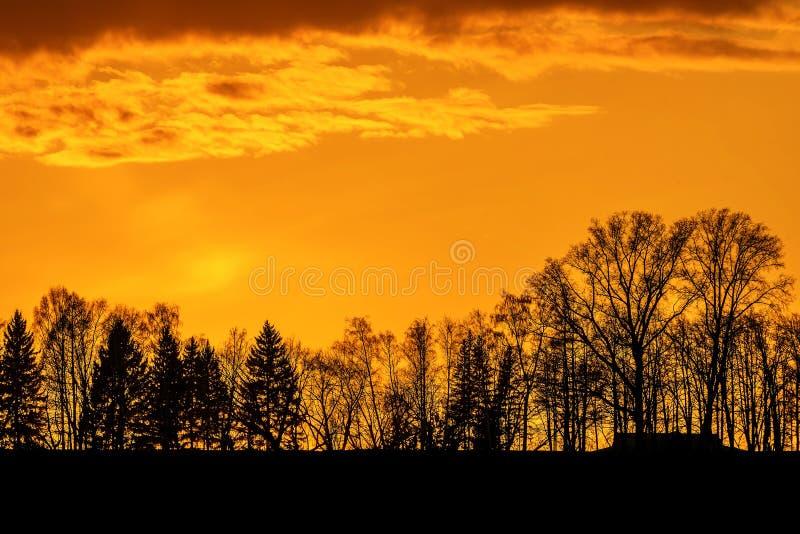 Небо захода солнца заволакивает деревья оранжевые стоковые изображения rf