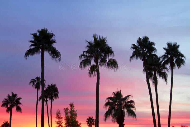 Небо захода солнца пальмы рая стоковые фото