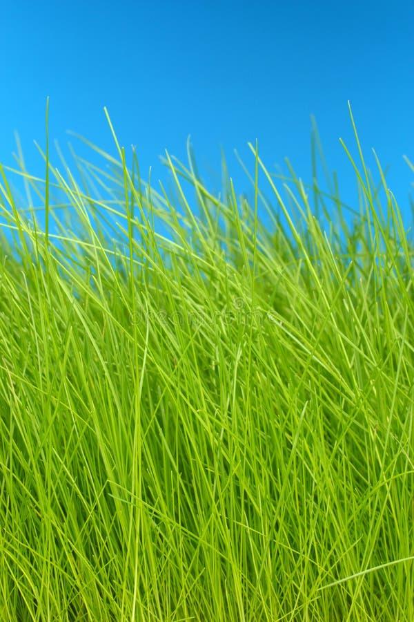 небо зеленого цвета травы eco предпосылки содружественное стоковая фотография