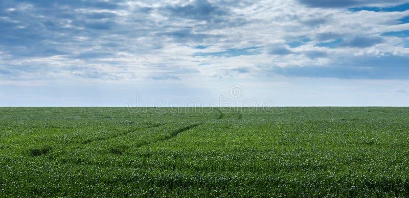 небо зеленого цвета травы поля стоковое фото