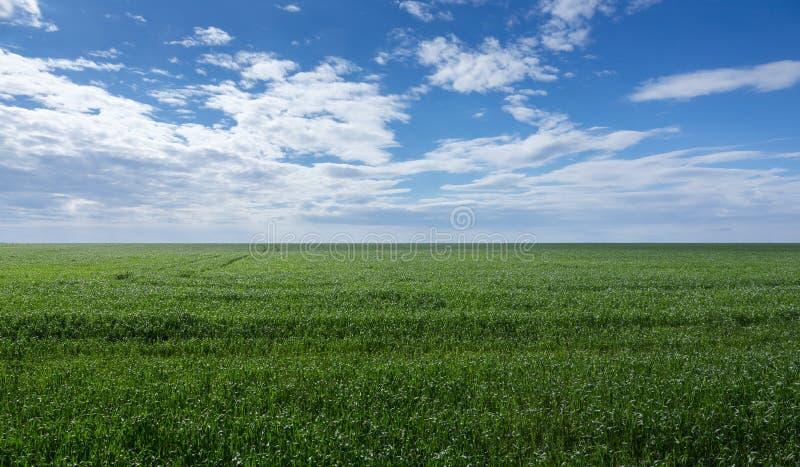 небо зеленого цвета травы поля стоковое изображение