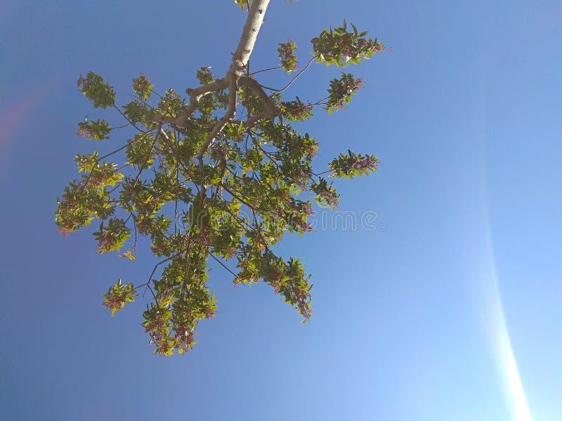 Небо и дерево стоковое фото rf