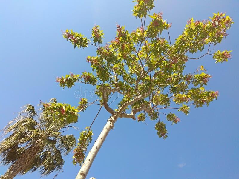 Небо и дерево стоковое изображение rf
