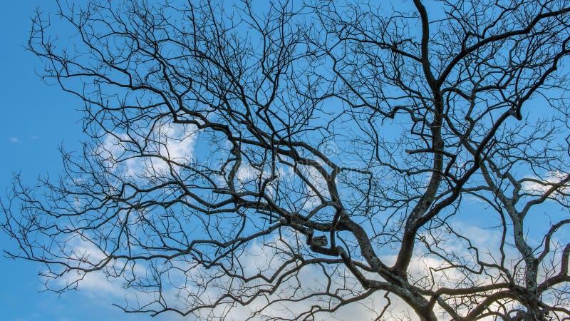 Небо и дерево в заходе солнца стоковая фотография rf