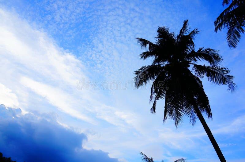 небо и кокосовая пальма стоковое изображение