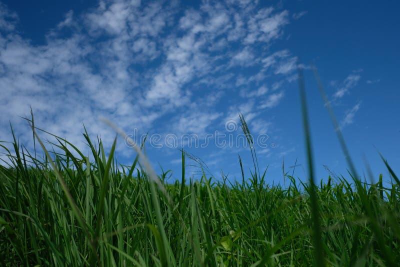 Небо и трава стоковые изображения rf
