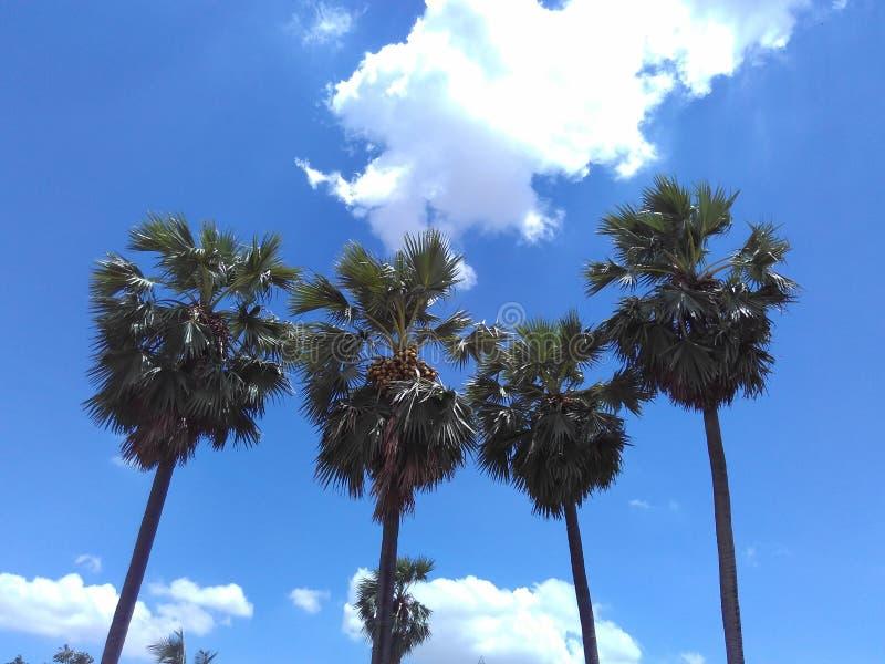 Небо кокоса стоковая фотография rf