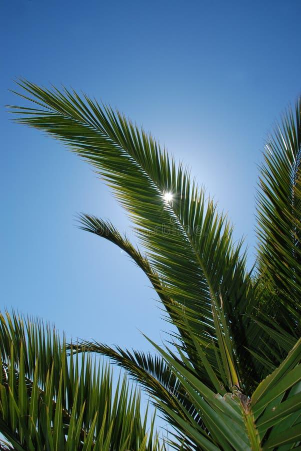небо ладони листьев стоковая фотография