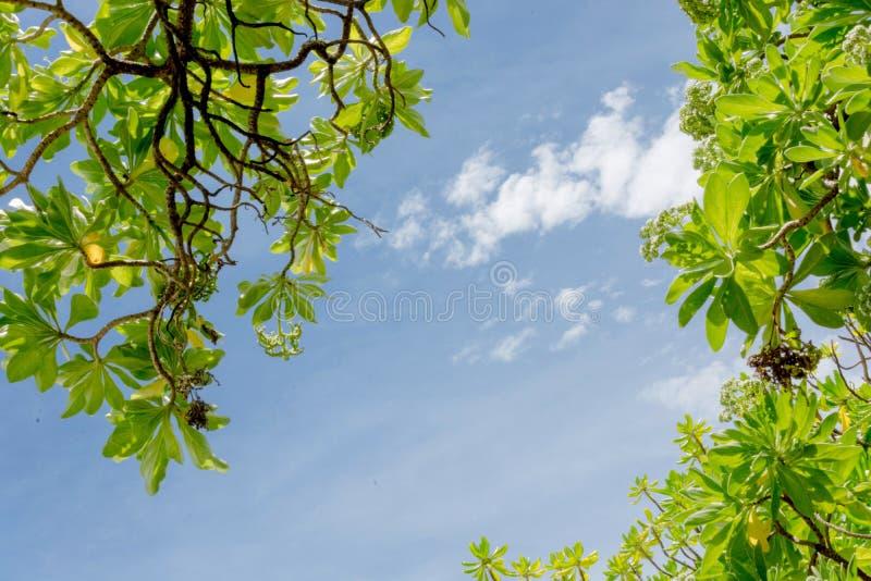 небо - Мальдивы стоковое изображение