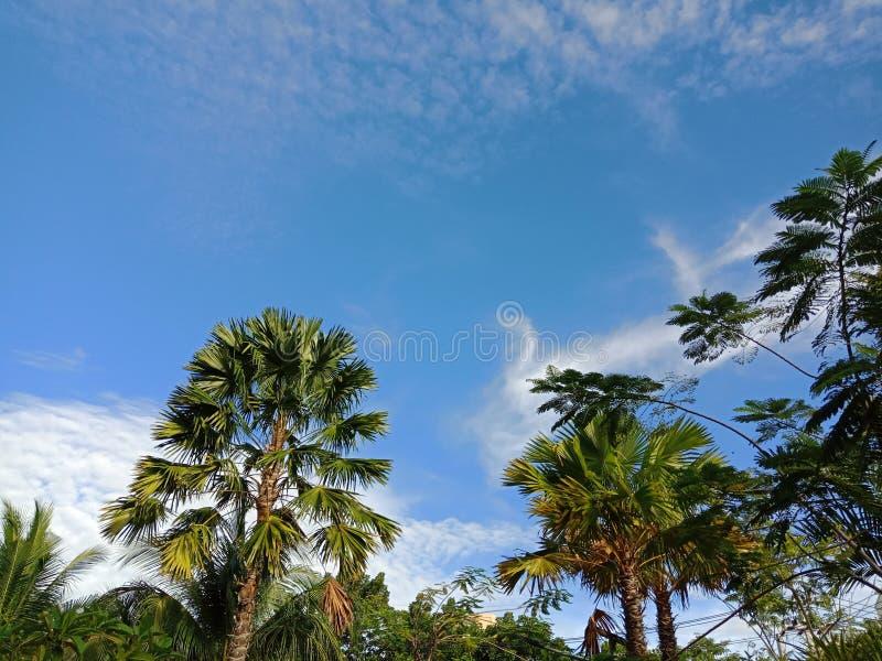 Небо над всем стоковые изображения rf