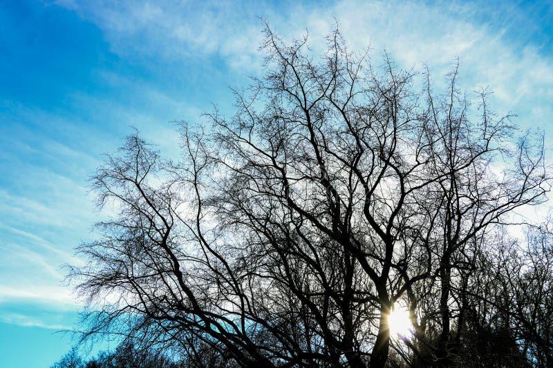 небо над деревьями в лесе стоковая фотография