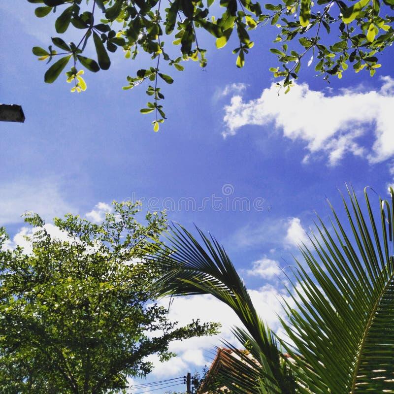 Небо над моим домом стоковое изображение