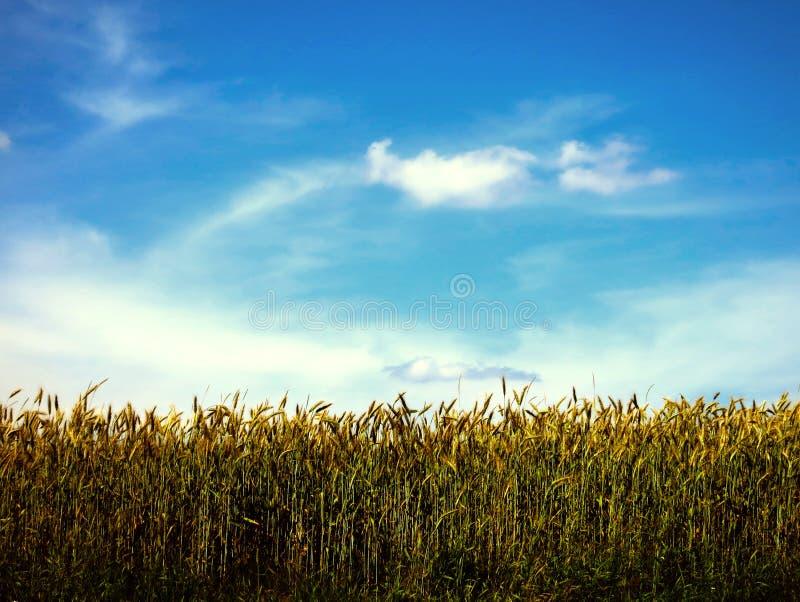 Небо над полем стоковые изображения