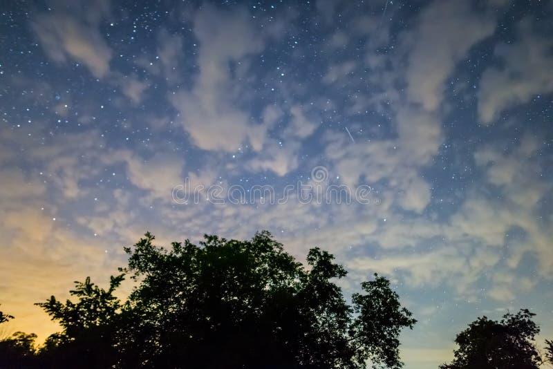 Небо ночи звездное и silhoutte дерева стоковая фотография rf
