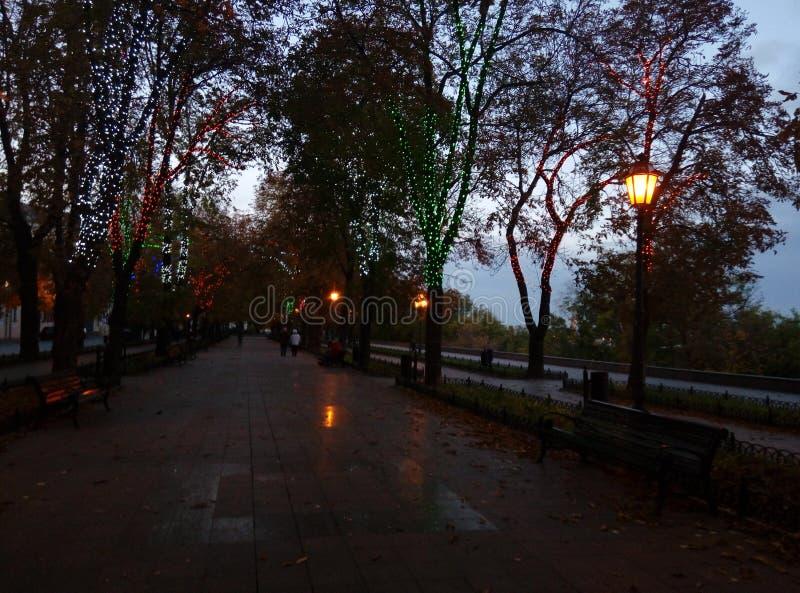 небо парка счастливое benches света стоковое изображение rf