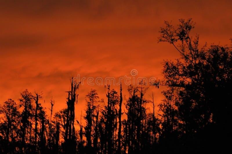 небо пожара стоковое фото