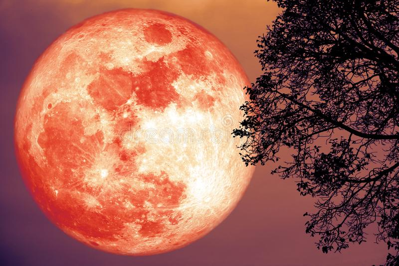 корреспондент клубничная луна фото думаю потому