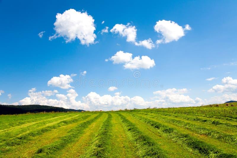 небо поля стоковые фотографии rf