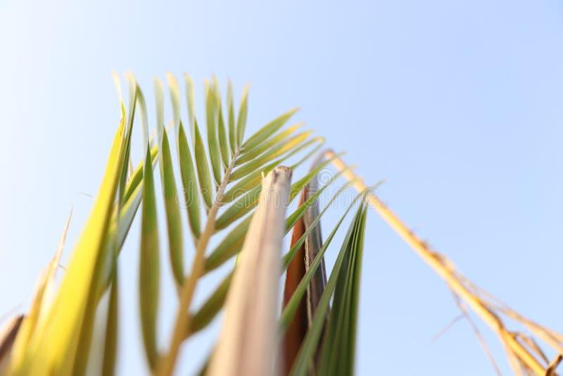 Небо предпосылки дерева стоковое фото rf