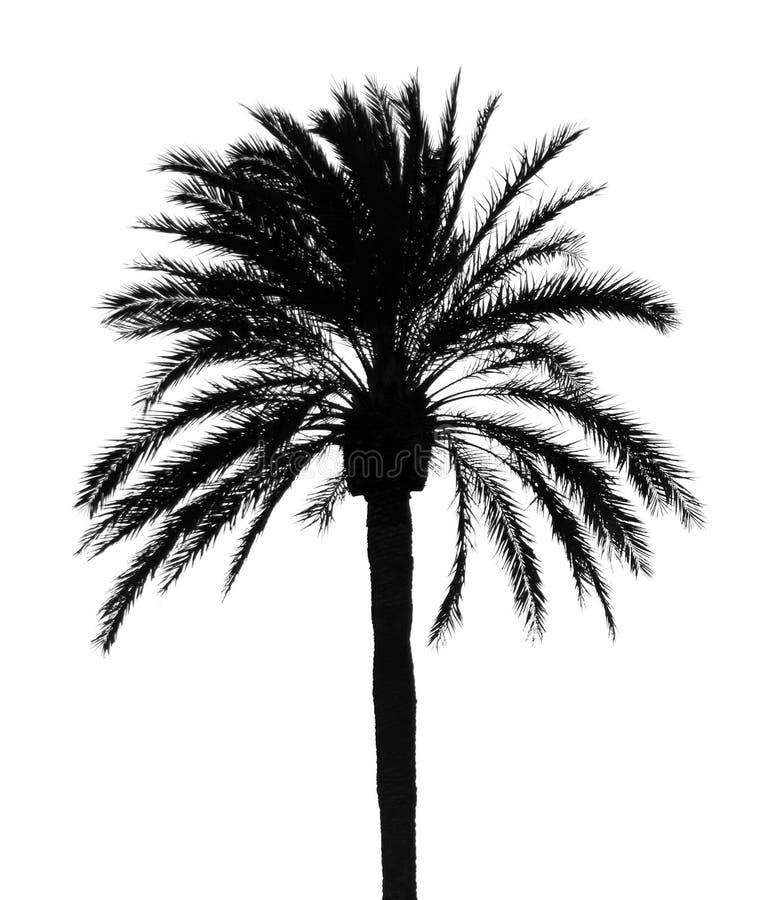 Небо силуэта пальмы на сумраке стоковое фото