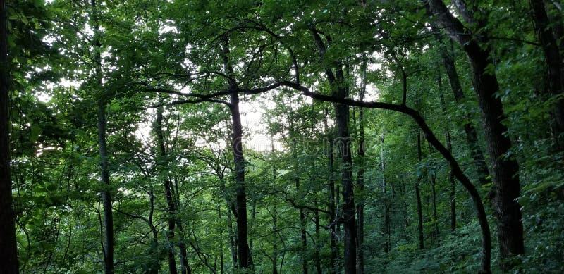 Небо сумрака через сень деревьев стоковые фотографии rf