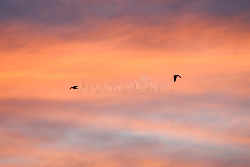 Небо цвета спектра с черной птицей силуэта в полете стоковые фото