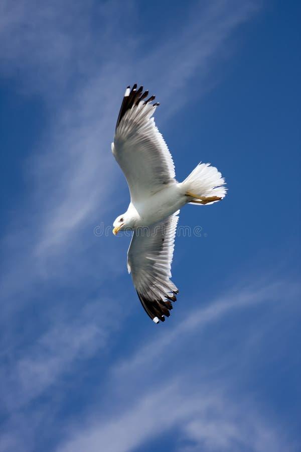 небо чайки стоковое фото