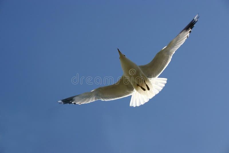 небо чайки стоковые изображения rf