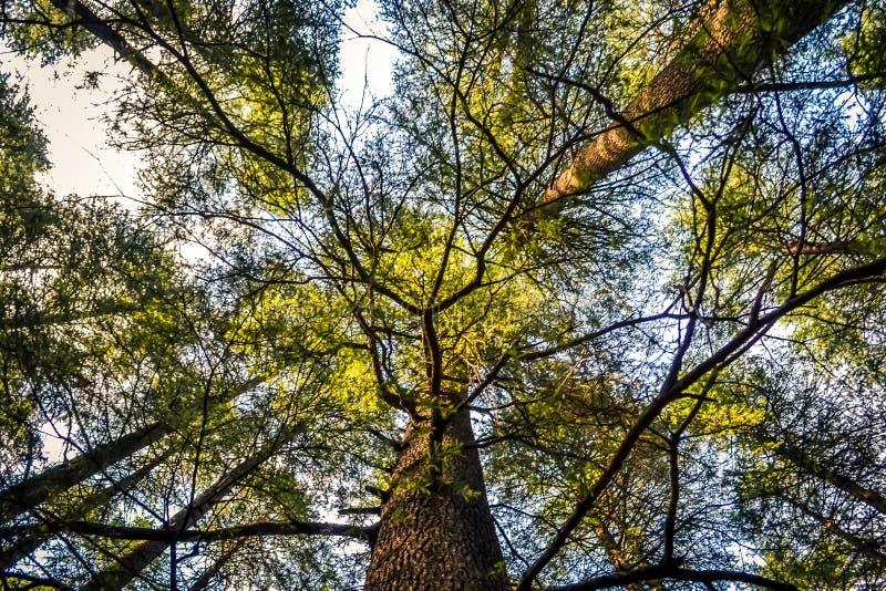 Небо через деревья стоковая фотография