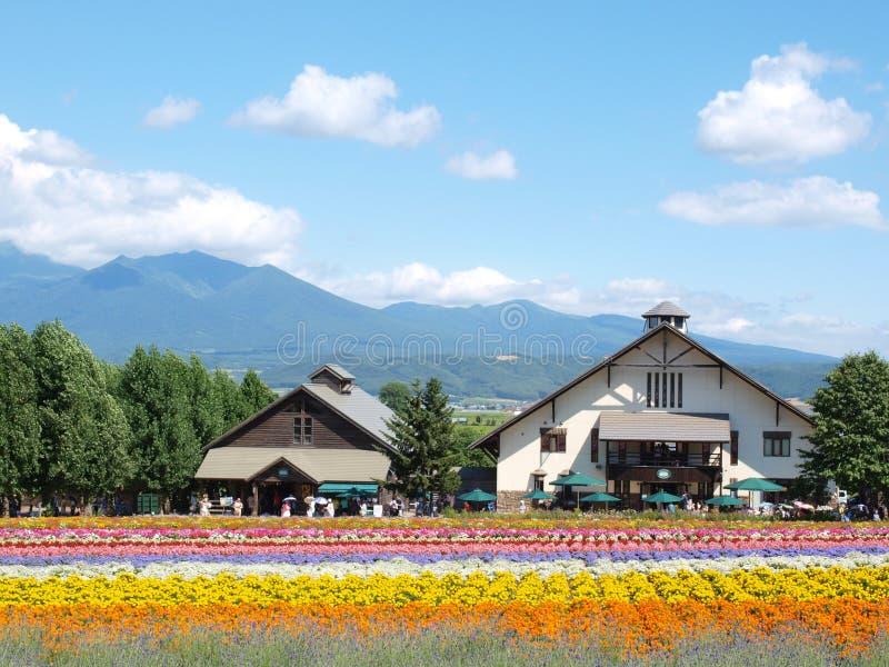 Небольшие дома на Tomita обрабатывают землю в Furano, Хоккаидо, Японии стоковая фотография