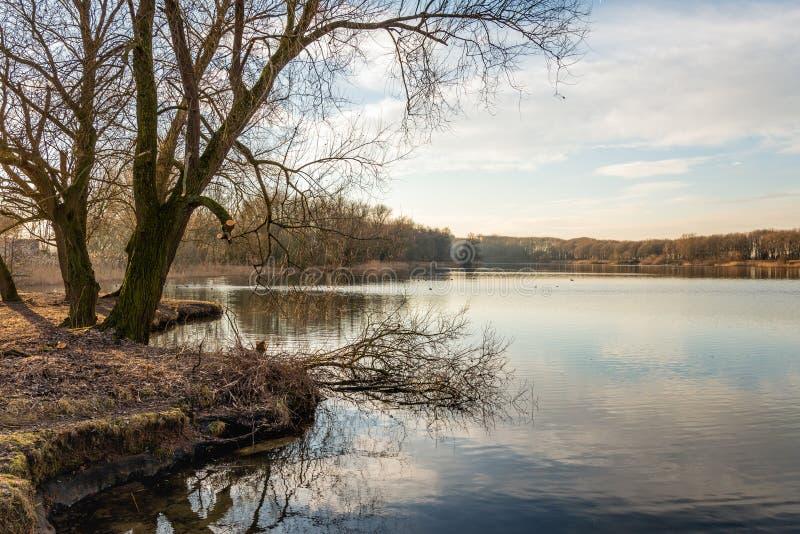 Небольшое озеро на windless день в сезоне зимы стоковая фотография rf
