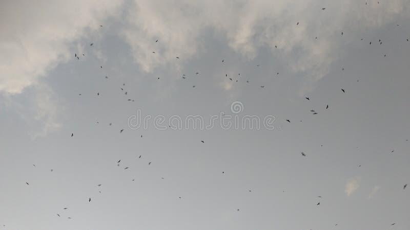 небо элемента конструкции птиц стоковые фото
