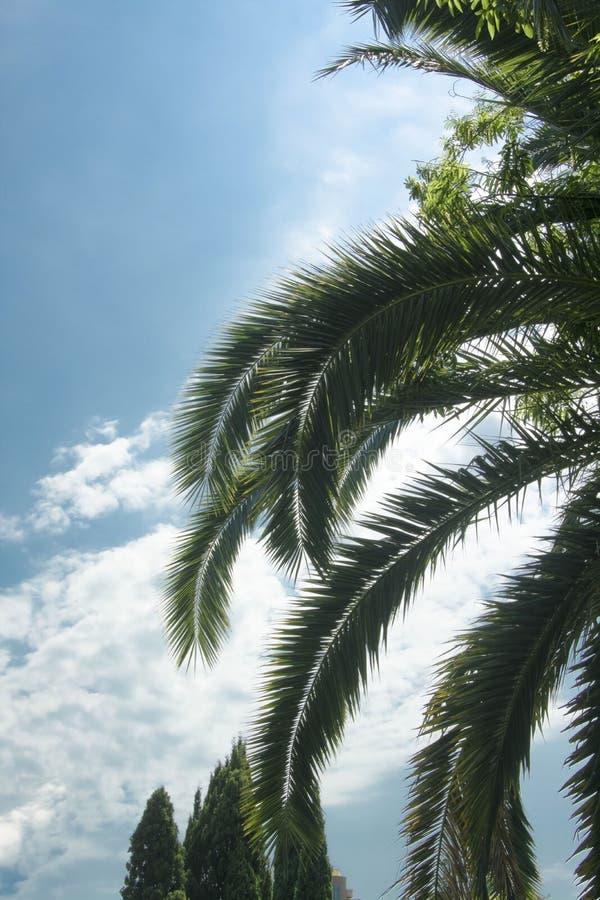 Небо южного города остатков неба кипарисов пальмы голубое стоковая фотография