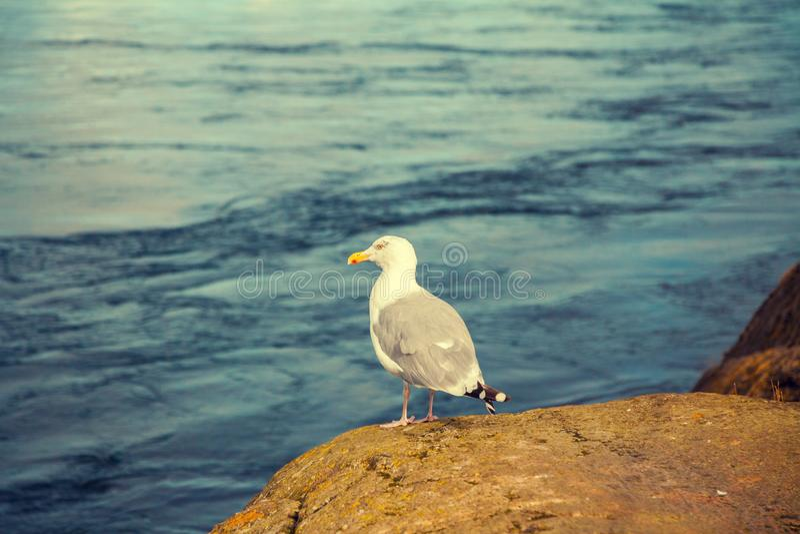 небо seascape чайки утеса природы предпосылки сидя стоковое фото