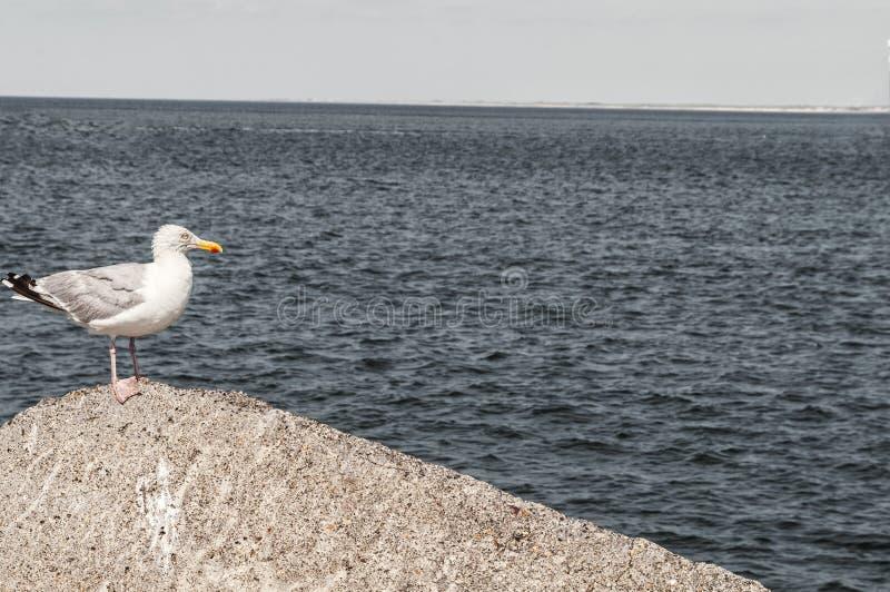 небо seascape чайки утеса природы предпосылки сидя стоковая фотография