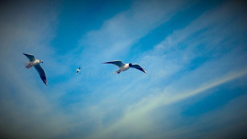 небо seascape чайок природы стоковая фотография