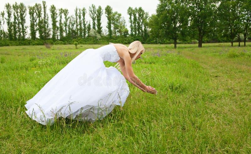 Невеста на зеленом луге стоковое изображение rf