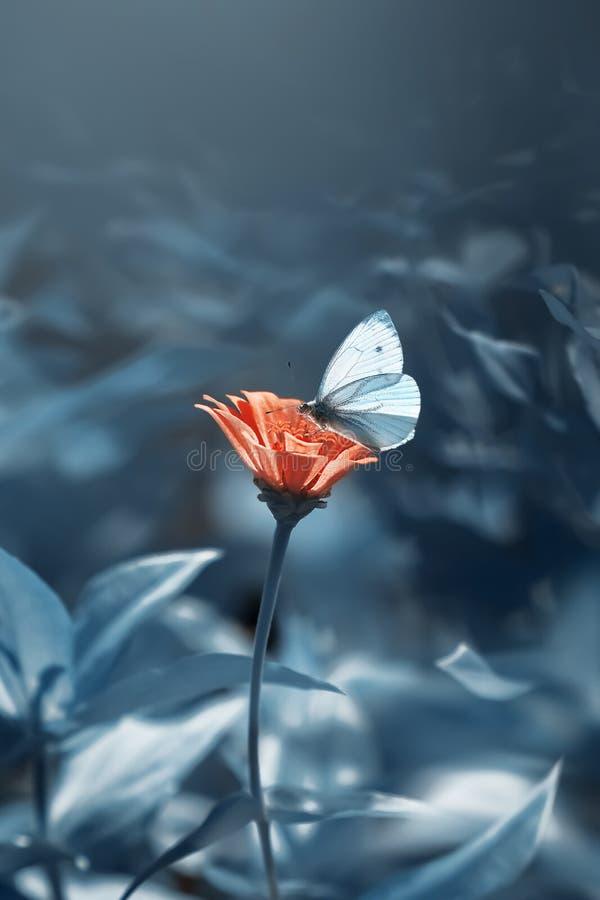 нежная белая бабочка на оранжевом цветке в летнем саду на голубом фоне Художественный летний фон стоковая фотография