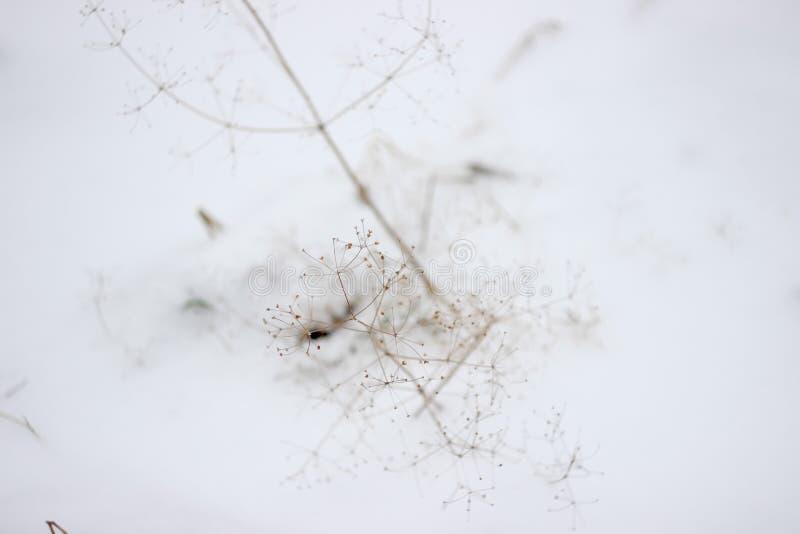 Нежность в краске предпосылки холодильника белой с чувствительной картиной ростков стоковое фото