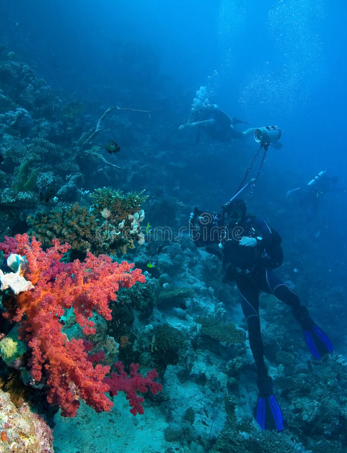 нежность коралла красная стоковая фотография rf