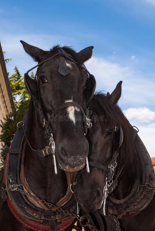Нежность лошади стоковая фотография rf