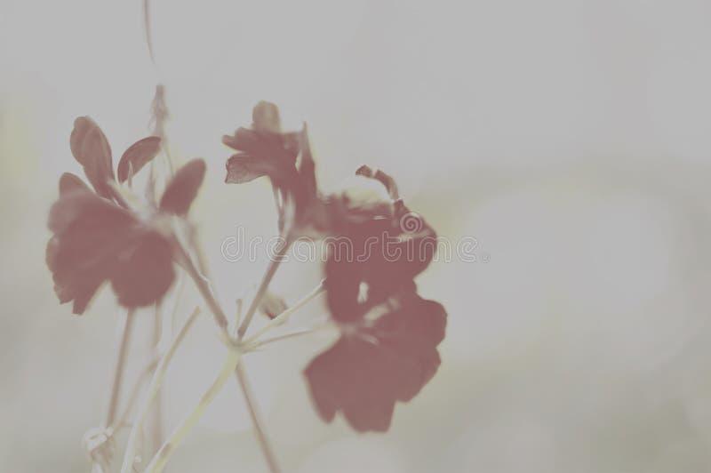 Нежные туманные цветки стоковые изображения rf