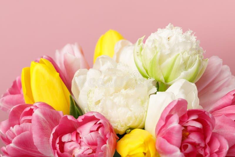 Нежные цветки тюльпана весны изолированные на розовой предпосылке стоковые изображения rf