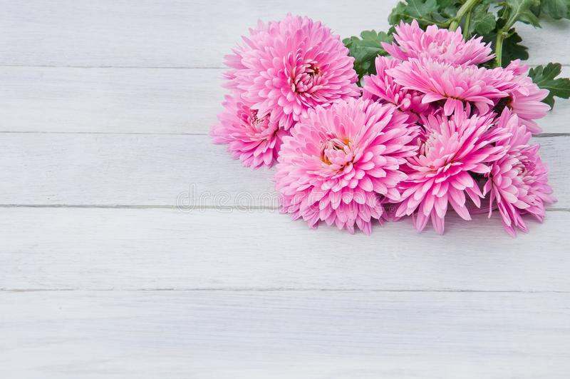 Нежный осветите - розовые цветки хризантем на белом деревянном ба стоковая фотография rf
