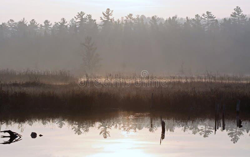 Нежный туман на туманном утре на болоте стоковое фото