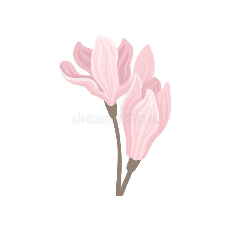 2 нежных розовых цветка весны Красивый blossoming завод Плоский элемент вектора для карточки плаката или приглашения иллюстрация вектора