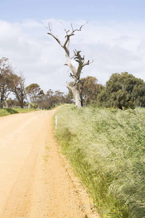 Незапечатанная грязная улица, мертвое дерево, полуостров Fleurieu, SA стоковые фотографии rf
