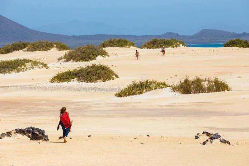 Неизвестное мужское kitesurfer на пляже в Corralejo, Фуэртевентуре, Канарских островах, Испании стоковое изображение