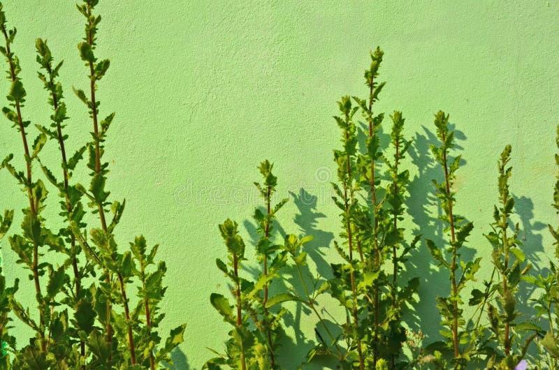 Неизвестный одичалый засоритель с тенью на зеленой стене стоковое фото
